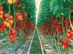 فروش 200متر زمین سند دار- جاده ساوه اولین شهرک خصوصی  گلخانه با زنجیره ارزش در ایران