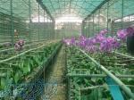 آموزش کشت گلخانه داری و کشت هیدروپونیک ایساتیس