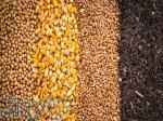 تأمین محصولات زراعی غلات از روسیه