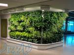 اجرای دیوار سبز   روف گاردن   فضای سبز