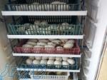 فروش تخم نطفه دار انواع طیور و پرندگان