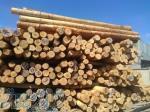 فروش چوب توس (غان) CFR بندر انزلی