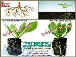 فروش هورمون ریشه زایی گیاهان