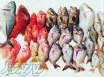 خرید ماهی در ایران و دبی