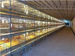 فروش قفس پرورش مرغ تخم گذار