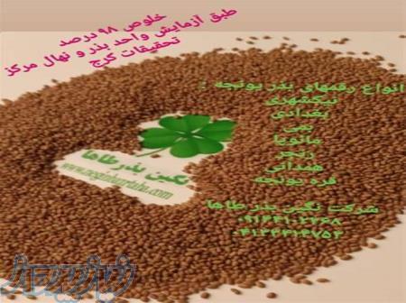قیمت بذر یونجه ، فروش بذر یونجه