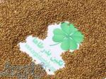 فروش بذر یونجه سردسیری و گرمسیری ، بذر یونجه دیمی