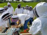 دوره آموزشی پرورش ملکه زنبور عسل فراساحل نگار