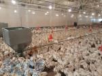 آموزش های کاربردی کشاورزی دامپروری شیلات