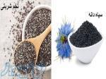خرید و فروش سیاه دانه و بذر تخم شربتی همدان