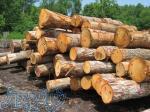 خرید چوب ،هرس ،کف بری