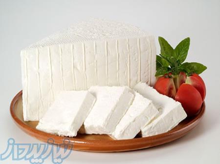 فروش مستقیم کیت آنتی بیوتیک شیر ، وارد کننده مستقیم آنزیم تی جی TG
