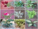 فروش انواع گل و گیاه آپارتمانی و زینتی
