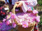 پخش عمده گلاب قمصر کاشان پخش سراسری(رایگان)