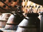 تولید عرق نعنا محصول سنتی کاشان پخش سراسری(رایگان)