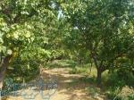 2000متر باغ در شهریار
