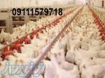 فروش مرغداری در مازندران ساری