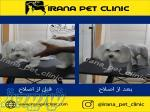 آرایشگاه حیوانات   کلینیک دامپزشکی ایرانا