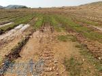 زمین کشاورزی به متراژ 1000متر دارای آب برق گاز و سند تک برگ مشاع