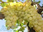 تولید و فروش بهترین انواع نهال و درخت میوه و زینتی در نهالستان آذربایجان