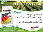کود کامل پودری N P K 12-12-36( 1) TE باواریا