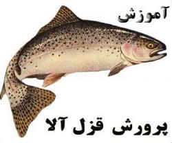 فیلم آموزشی پرورش ماهی قزل الا  - تهران
