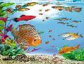 واردات ماهی گیاه آکواریم لوازم اکواریم