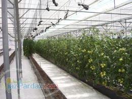 ساخت گلخانه مدرن