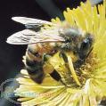 روش تشخیص عسل طبیعی و خالص از عسل تقلبی و مصنوعی