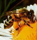 خدمات زنبور داری وفروش
