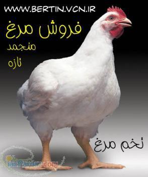 فروش مرغ منجمد و تازه