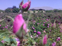 فروش خانه باغ در قمصر کاشان