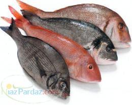 کارگاه تخصصی پرورش ماهیان سردابی وگرمابی