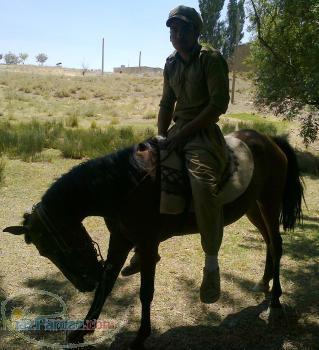 فروش کره اسب2ساله
