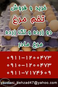 خرید و فروش تخم مرغ تک زرده و دو زرده مرغ مادر