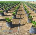 شركت امفاكو مهندسي فروش و تأمين تجهيزات گلخانه