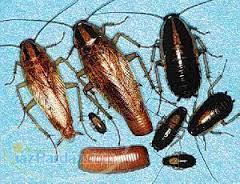 سم سوسک و ساس برای دفع حشرات بدون بو و موثر