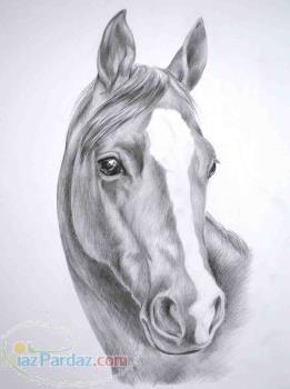 خرید و فروش اسب اصیل ایرانی و خارحی