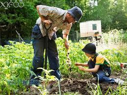خريدپستي آموزش اسرار باغبانی آموزش اصول باغبانی و گل کاری طراحی فضای سبز