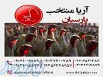 فروش جوجه بوقلمون در اصفهان