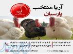 فروش بوقلمون در یزد