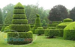 انجام امور فضای سبز و باغبانی منزل و محل کار و ویلا و
