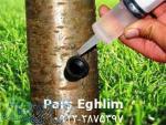 تزریق مستقیم مواد مغذی به تنه درخت