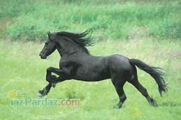 پرورش و فروش اسب