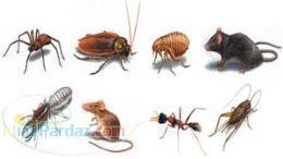 دستگاه دفع جوندگان و حشرات 09144432479