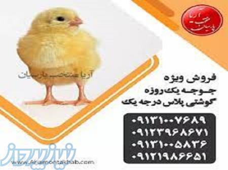 فروش انواع جوجه مرغ بومی _کبک بلدرچین اردک پکنی