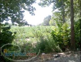 ملارد- فروش باغچه در قواره های 1000 متری
