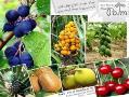فروش انواع نهال میوه پیوندی