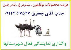 گروه تجاری اریا پخش توزیع کننده انواع محصولات بوقلمون  - تهران