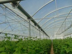 ساخت گلخانه گلخانه ساز گلخانه سازی گلخانه اسپانیای گل - تهران